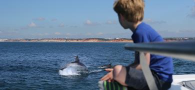 Dolphin in Vilamoura