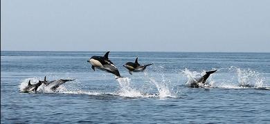 Dolphins Portimão