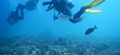 Explore the underwater world