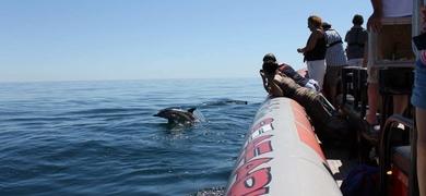 golfinhos em Portimão