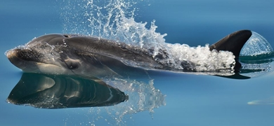 Visit the cute dolphins in the Sado Estuary