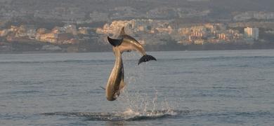 Dolphin tour Fuengirola
