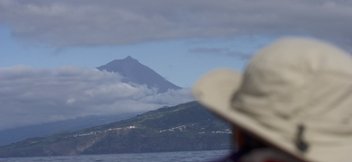 Whale Watching Pico