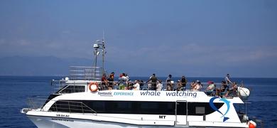 Catamaran São Miguel