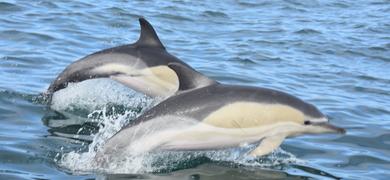 Nazaré Dolphin watching