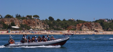 Dolphins watching in Algarve