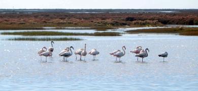 Ria Formosa birdwatching