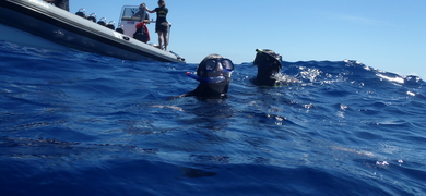 Swimming with dolphins in Terceira