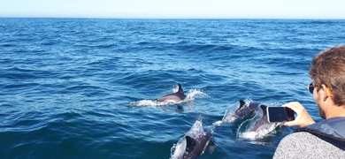 dolphins in Lisbon