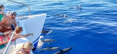 Cover for Dolphin & whale watching in Madeira - catamaran