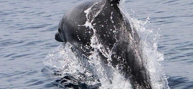 La Gomera dolphin spotting