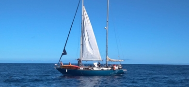 Cover for Sailing tour with whales and dolphins in La Gomera