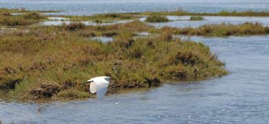 Ria Formosa Birds