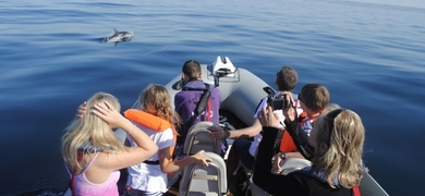 Dolphin tour in Faro