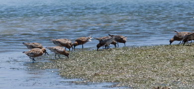 Ria Formosa Birdwatching Boat Tour Cover