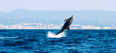 boat trips ria formosa - dolphin watching