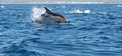 Dolphin watching in Olhão