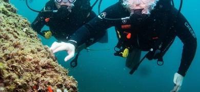 Santa Pola day diving