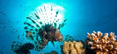 Marine sea life in Santa Pola