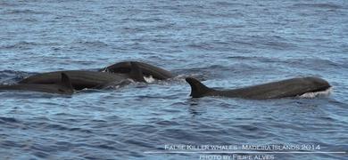 Wild dolphin watching