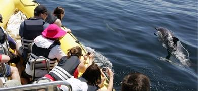 Dolphin watching boat tour from Praia da Luz Portugal