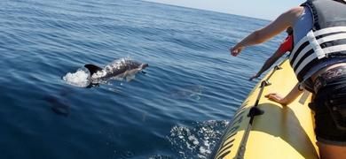 Dolphin watching boat tour Praia da Luz Portugal