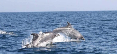 Dolphins and Caves cruise in Albufeira