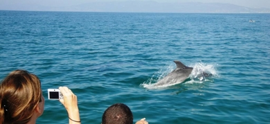 Dolphin watching tour in Ria Formosa