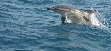 Admire wild dolphins