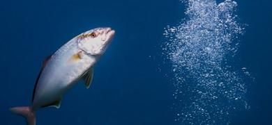 Meet some fish in Tenerife