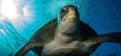 Make friends with turtles Snorkeling in Tenerife