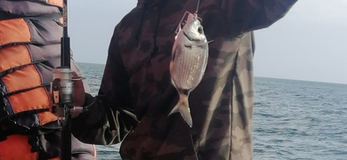 Catch some fish in the Lagos area