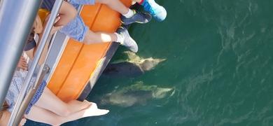 Admire the magical creatures in the sea around Lagos