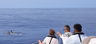 It's a magical experience to spot dolphins in Madeira