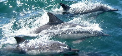 Dolphin watching and island tour in Ria Formosa