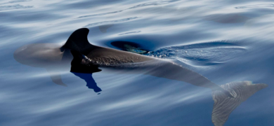 We may find several species of whales and dolphins