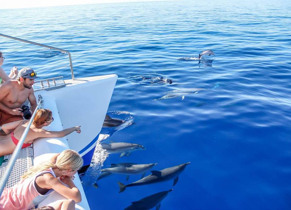 You can even spot some dolphins!