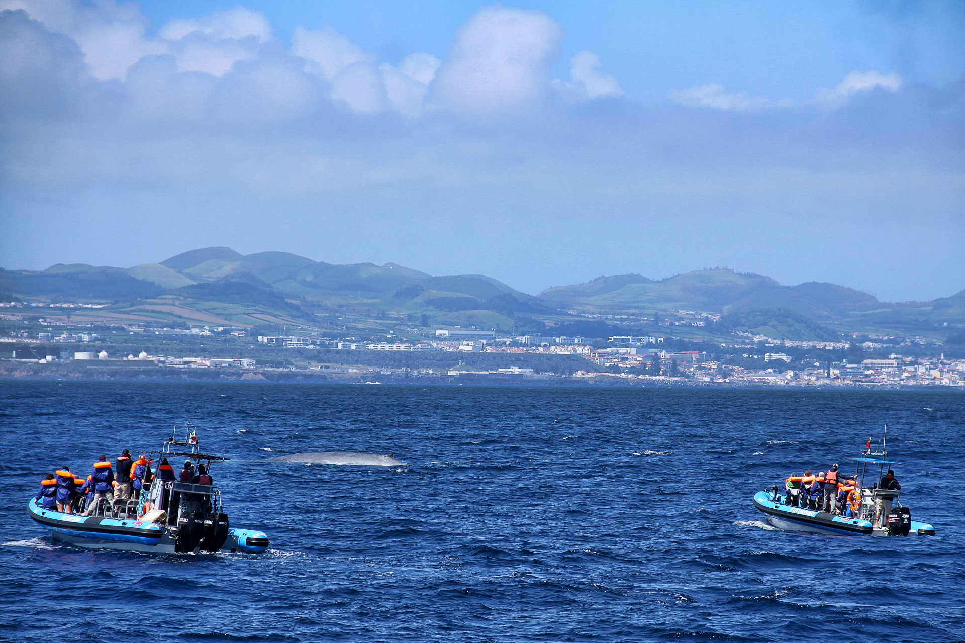 Whale watching tour in São Miguel