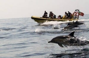 Dreamwave - dolphin watching from Albufeira