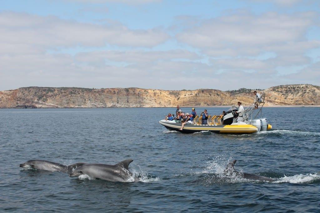 Dolphin lagos