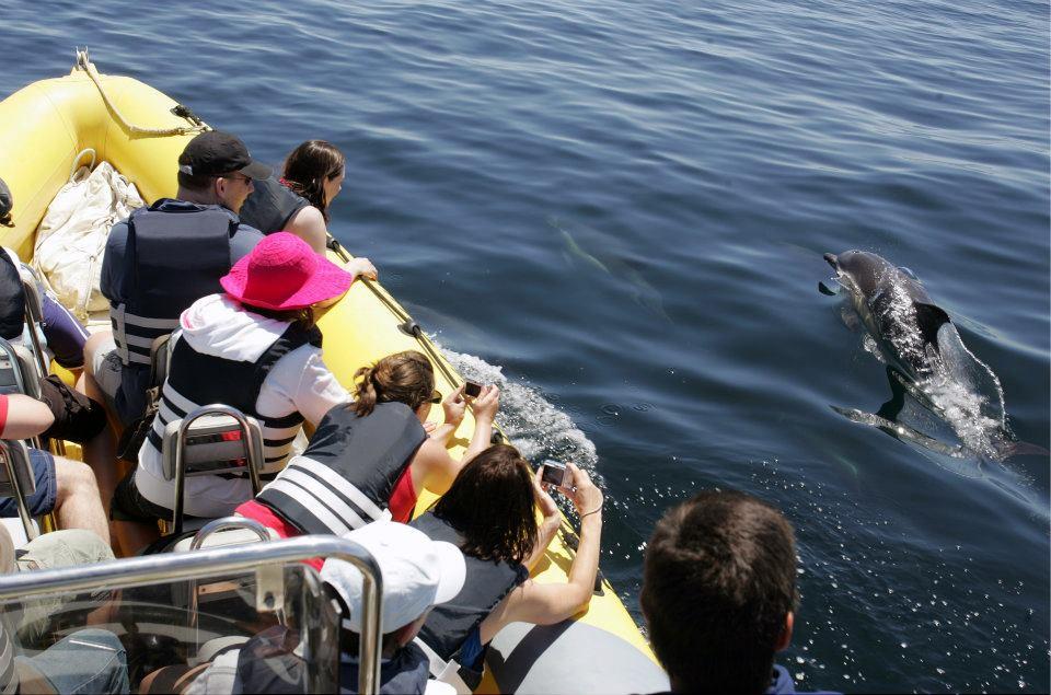 dolphin watching from luz beachhut