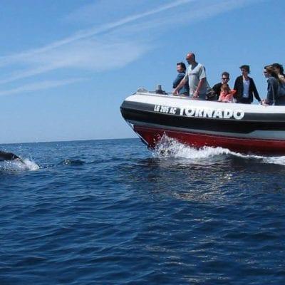 observação de golfinhos de lagos, passeio de barco lagos,