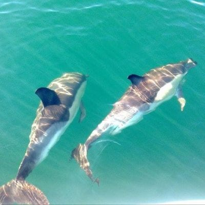 dolphins olhao