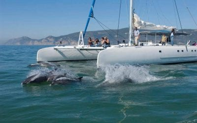 vertigem azul - dolphin watching from Setubal