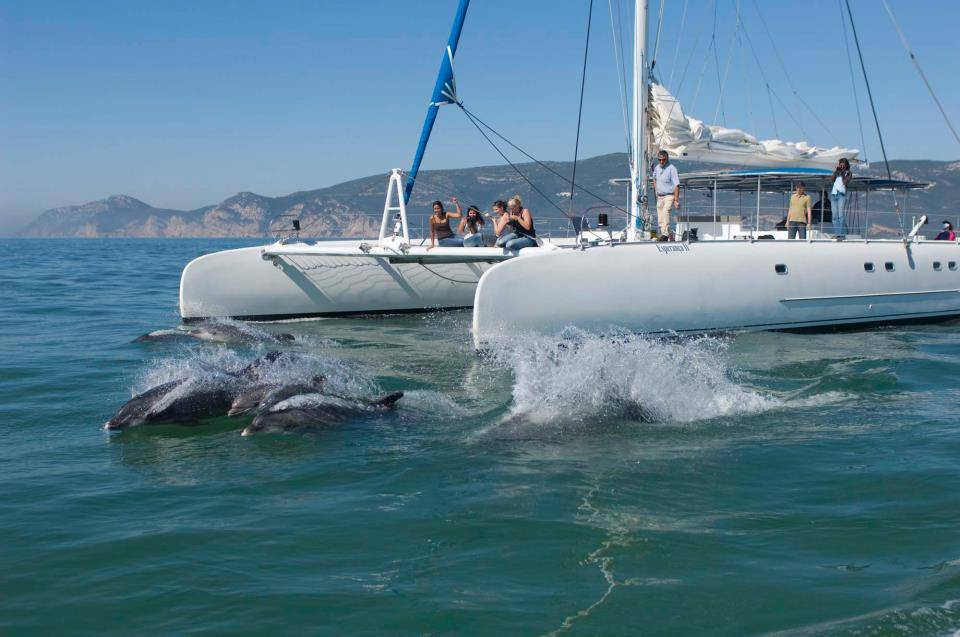 vertigem azul - dolphin watching from Setubal - Things to do in Setúbal