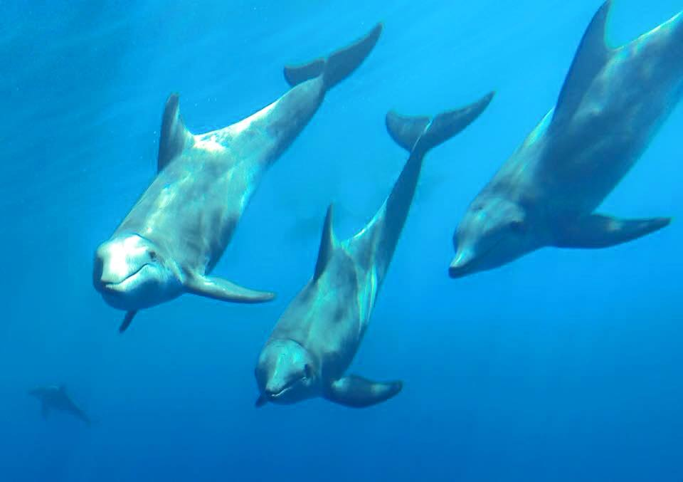 Local Dolphin Tours