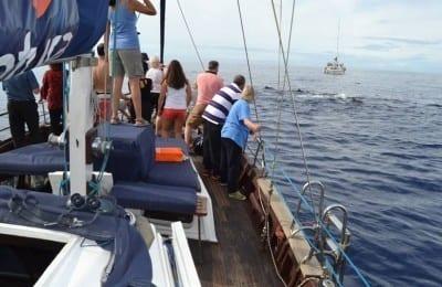 sailing boat madeira