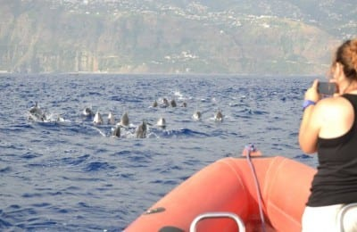 striped dolphins funchal