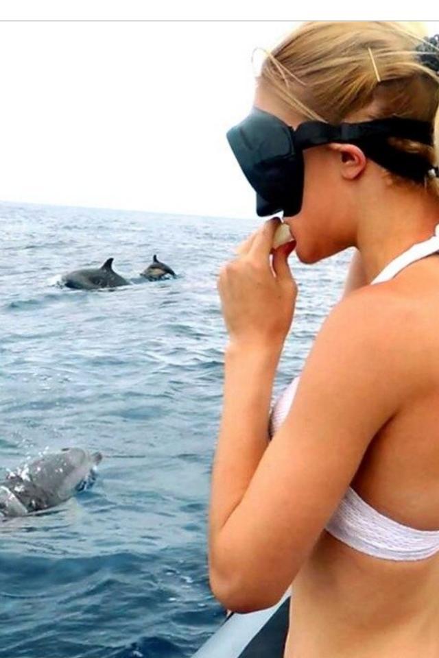 Zwemmen Met Dolfijnen Vanaf Madeira Seabookings