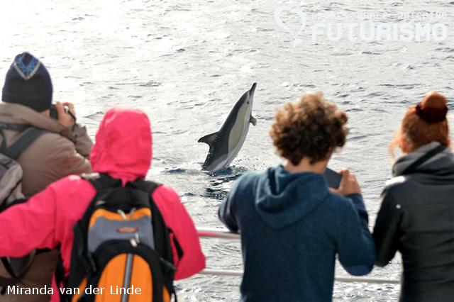 Whale watching São Miguel 5